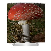 Amanita Muscaria Shower Curtain