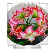 Amaryillis Flower Ring Shower Curtain