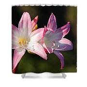 Amaryllis Belladonna Shower Curtain