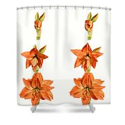 Amaryllis Blooming Shower Curtain