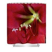 Amaryllis Flower Shower Curtain