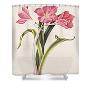Amaryllis Purpurea Shower Curtain