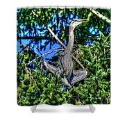Amazing Heron Shower Curtain