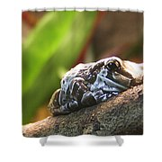 Amazon Milk Frog Shower Curtain