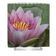 Amazon Water Lily Victoria Amazonica Shower Curtain