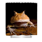 Amazonian Horned Frog Shower Curtain