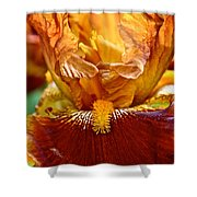 Amber Stripes Shower Curtain