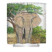 Amboseli Elephant Shower Curtain