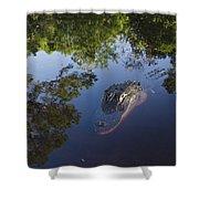 American Alligator In The Okefenokee Swamp Shower Curtain