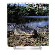 American Alligators Shower Curtain