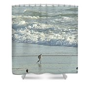 American Avocet In Non-breeding Plumage      Recurvirostra Americana  Shower Curtain