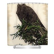 American Bald Eagle In Tree Shower Curtain
