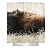 American Bison 2 Shower Curtain