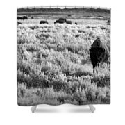 American Bison In Black And White Shower Curtain by Sebastian Musial