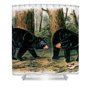 American Black Bear, 1844 Shower Curtain