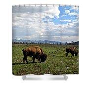 American Buffalo 10 Shower Curtain