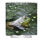 American Bull Frog Shower Curtain
