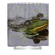 American Bullfrog Shower Curtain