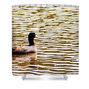 American Coot Floating By Shower Curtain