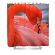 American Flamingo Shower Curtain