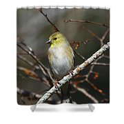 American Gold Finch Shower Curtain
