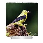 American Goldfinch Shower Curtain