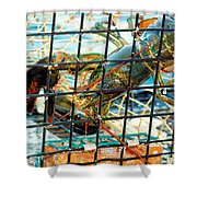 American Lobster In Trap In Chatham On Cape Cod Shower Curtain