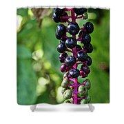 American Pokeweed Berries Shower Curtain
