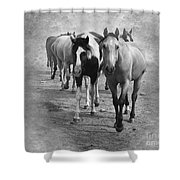 American Quarter Horse Herd In Black And White Shower Curtain