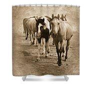 American Quarter Horse Herd In Sepia Shower Curtain