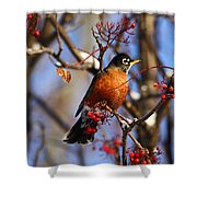 American Robin Shower Curtain
