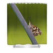 American Snout Butterfly - Libytheana Carinenta Shower Curtain