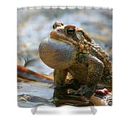 American Toad Croaking Shower Curtain