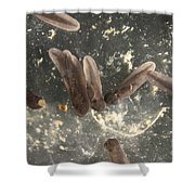 American Toad Tadpoles Shower Curtain by Ted Kinsman