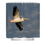 American White Pelican Pelecanus Shower Curtain