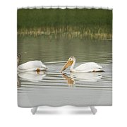 American White Pelicans Swim In A Line Shower Curtain