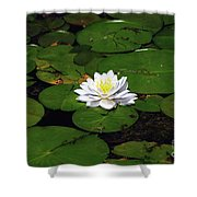 American White Waterlily Shower Curtain