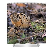 American Woodcock Bird Shower Curtain