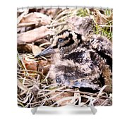 American Woodcock Chick Shower Curtain