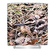 American Woodcock Chick No. 2 Shower Curtain