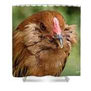 Amerucana Shower Curtain