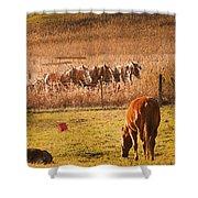 Amish Transportatin All Sizes Shower Curtain