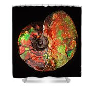 Ammonite Fossil Shower Curtain