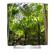 Among The Tree Ferns Shower Curtain