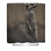 An Adult Meerkat Suricata Suricatta Shower Curtain
