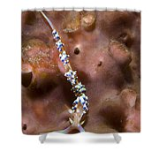 An Aeolid Nudibranch On An Orange Shower Curtain