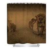 An African Lioness And Cubs, Panthera Shower Curtain