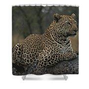 An Alert Leopard Rests On A Fallen Tree Shower Curtain