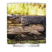 An American Alligator On A Log Shower Curtain