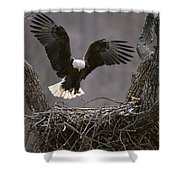 An American Bald Eagle Flies Shower Curtain